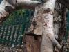 silver-birch-spider-sculpture-with-taste