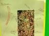 oakwood-constructivism-project-215